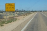 Beware of the shot on every guidebook to Australia - On the Eyre Highway, we didn't see any camels, or Emus and only mostly dead Roos
