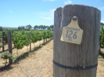 Margaret River Winery - Normally a Sav Blanc girl, I developed a taste for a nice Chardonnay in Margaret River